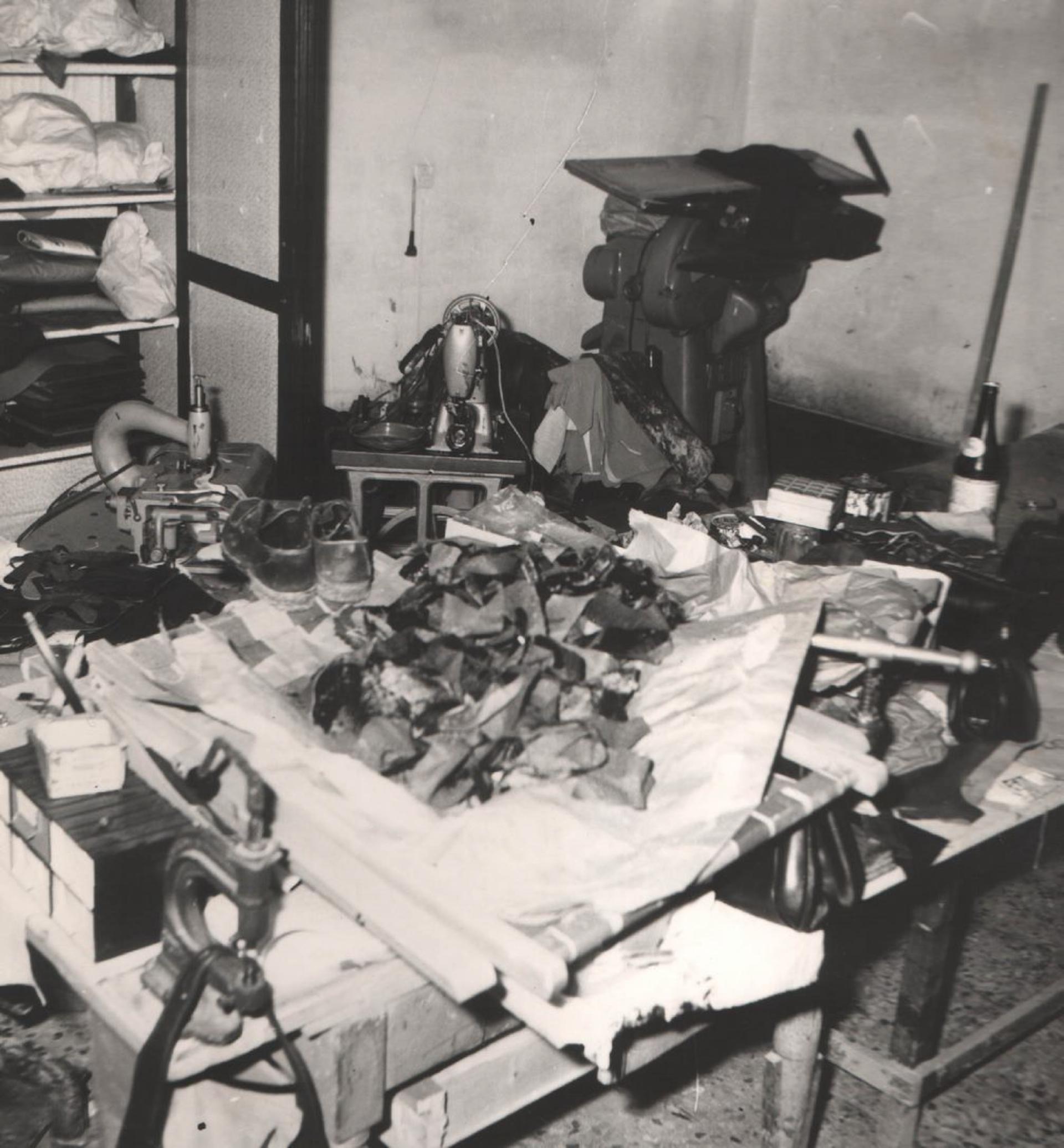 Pelletteria alluvionata 07-11-1965